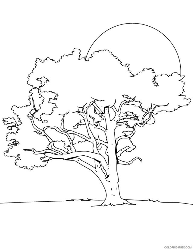 Printable Tree Coloring Pages Tree Nature of Trees Printable 27