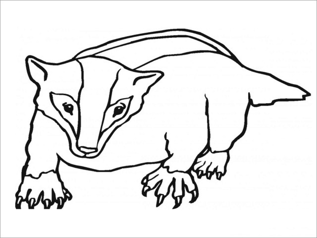 Badger Coloring Page for Kids - ColoringBay