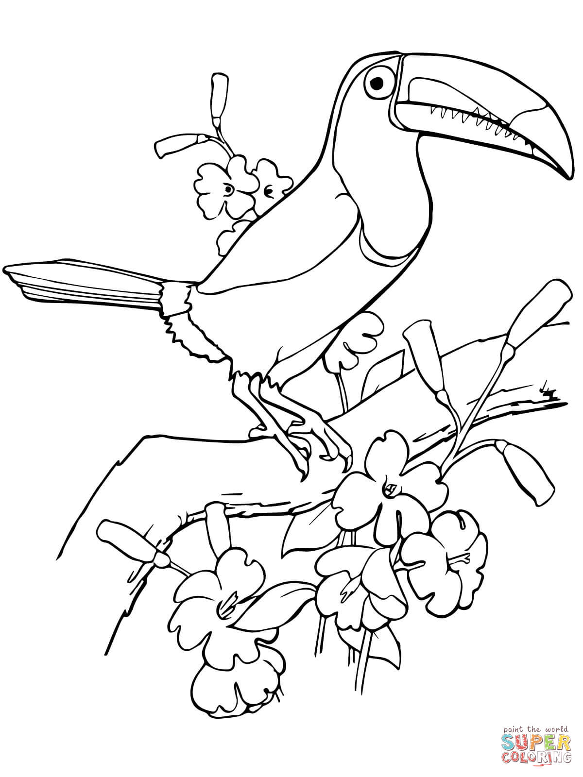 Keel Billed Toucan Coloring Page
