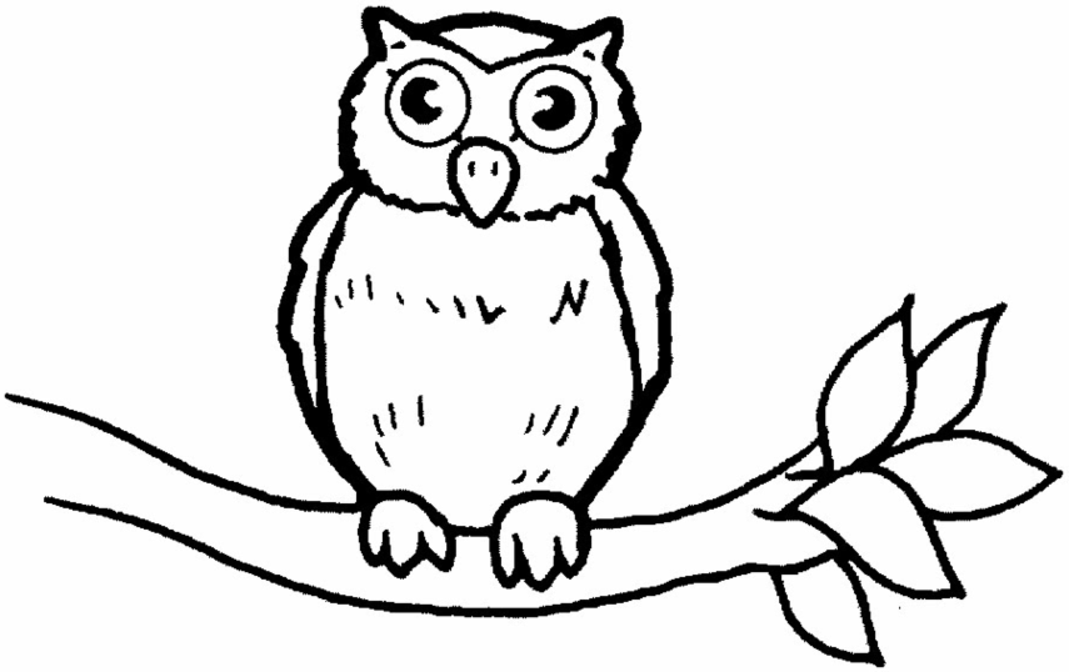 Owl Coloring Pages Printable Coloring Home