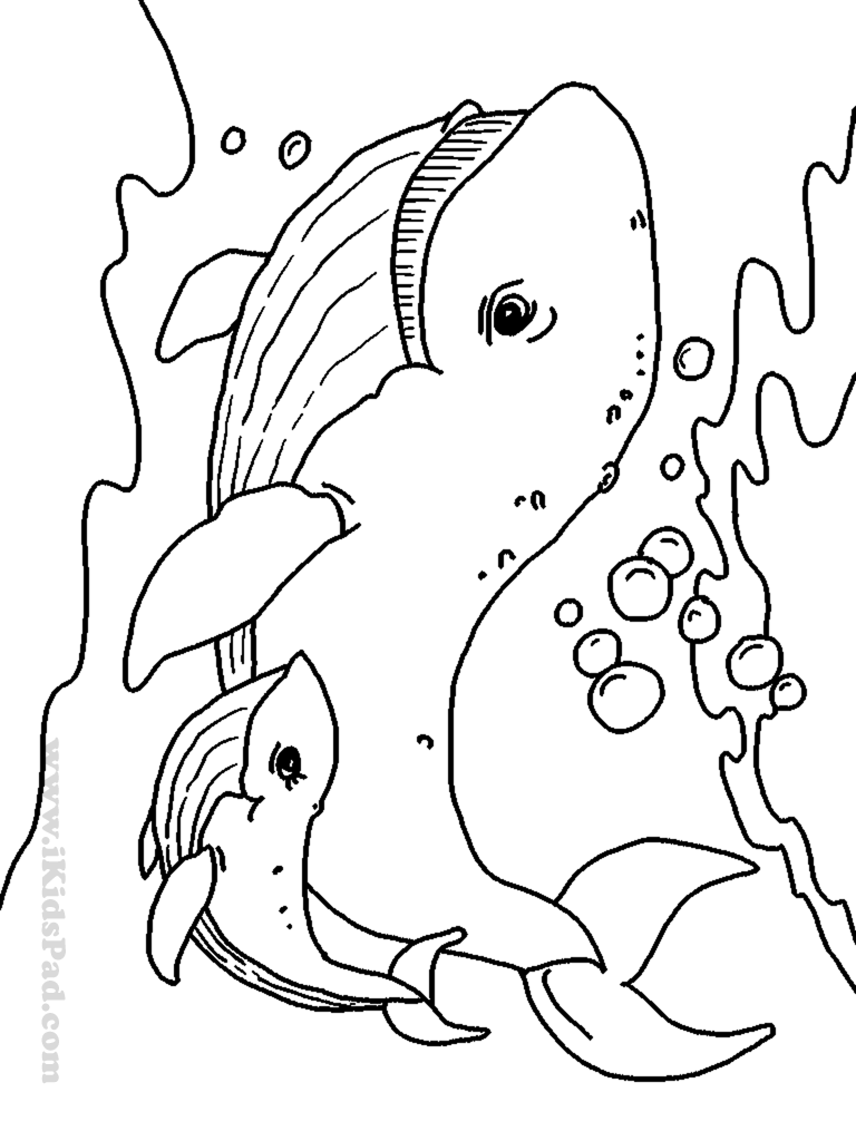 Free Printable Coloring Pages Baby Animals - Coloring Home | free printable colouring pages of sea animals