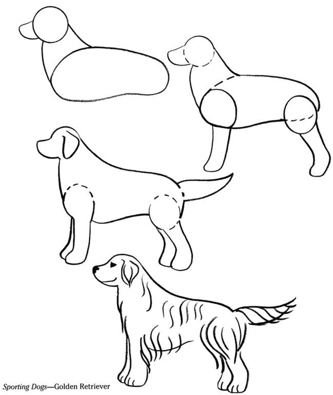golden retriever coloring pages  coloring home