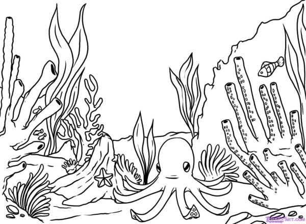 coral coloring pages # 12