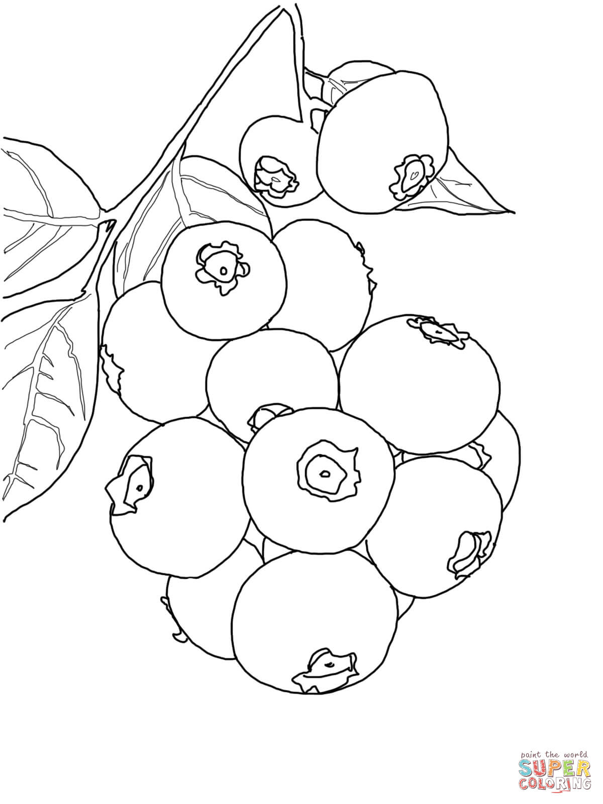 Blueberry Coloring Page