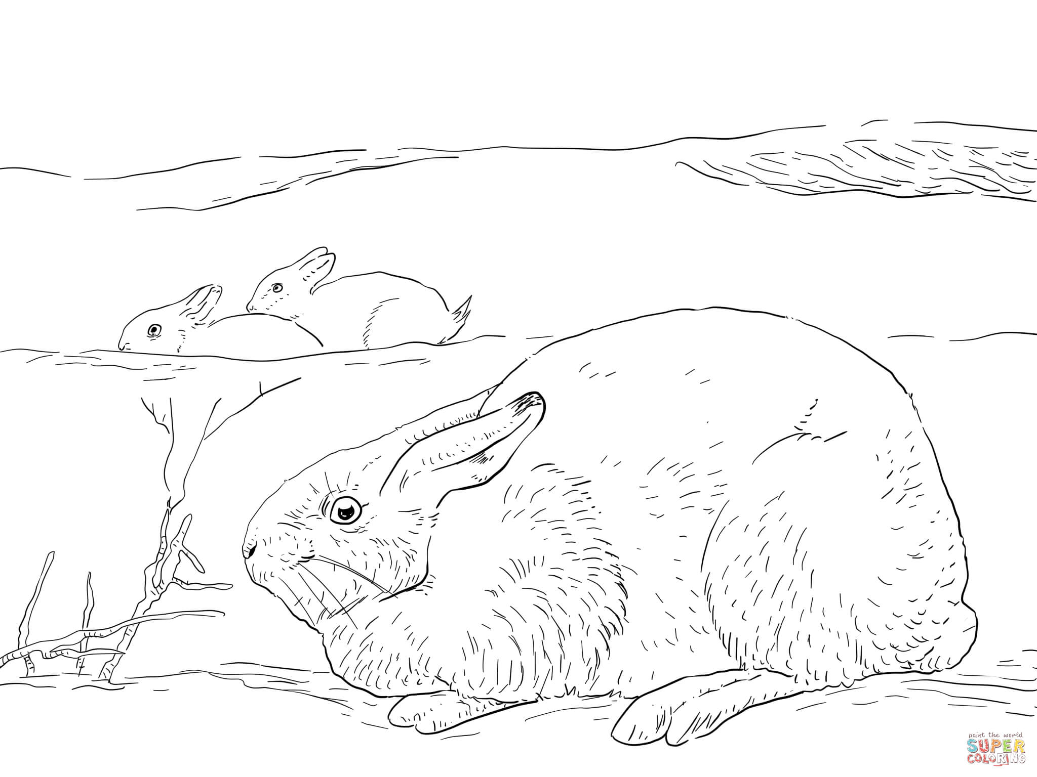 Arctic Coloring Page