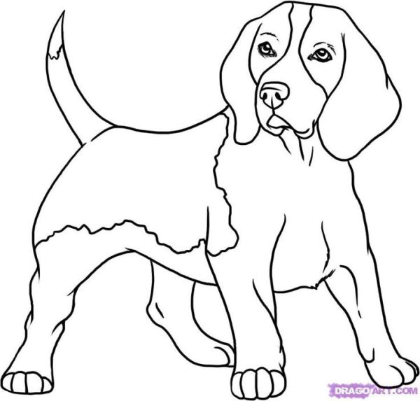 beagle coloring pages # 3