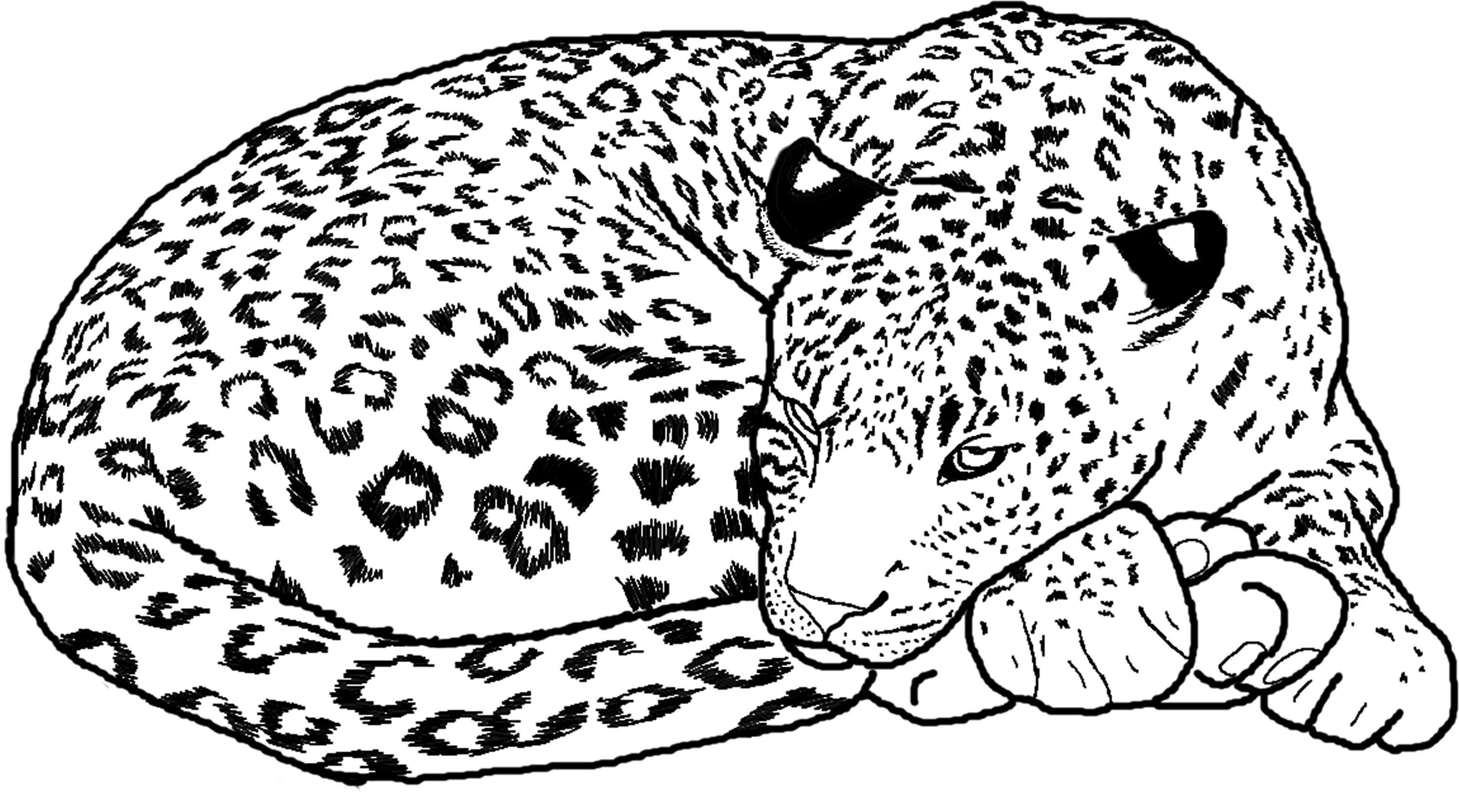 Cute Baby Cheetah Coloring Pages Coloring Home