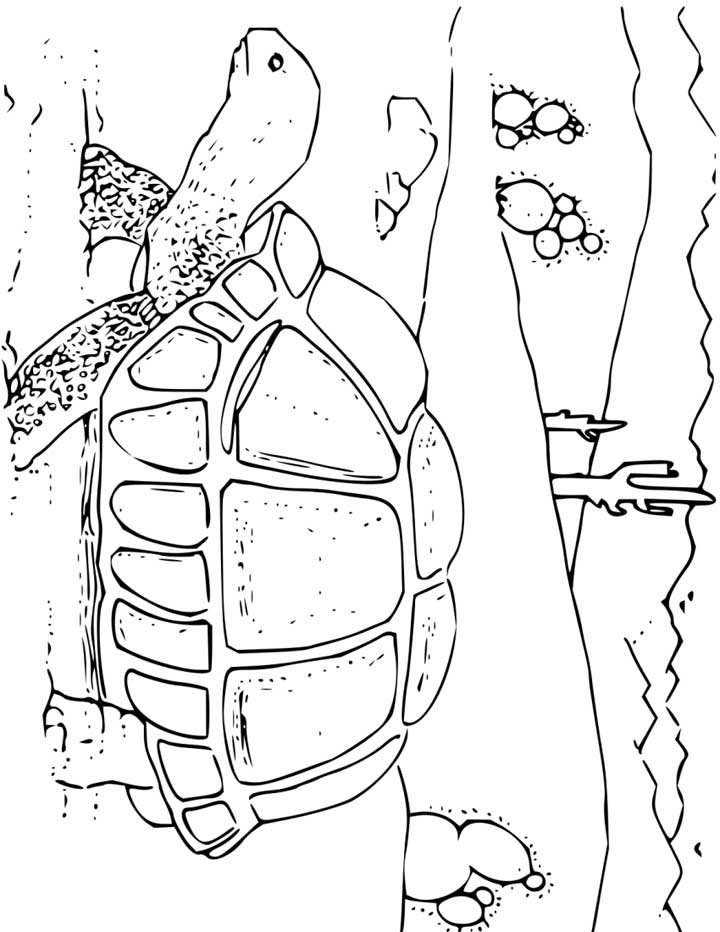 Desert Coloring Pages For Kids Coloring Home
