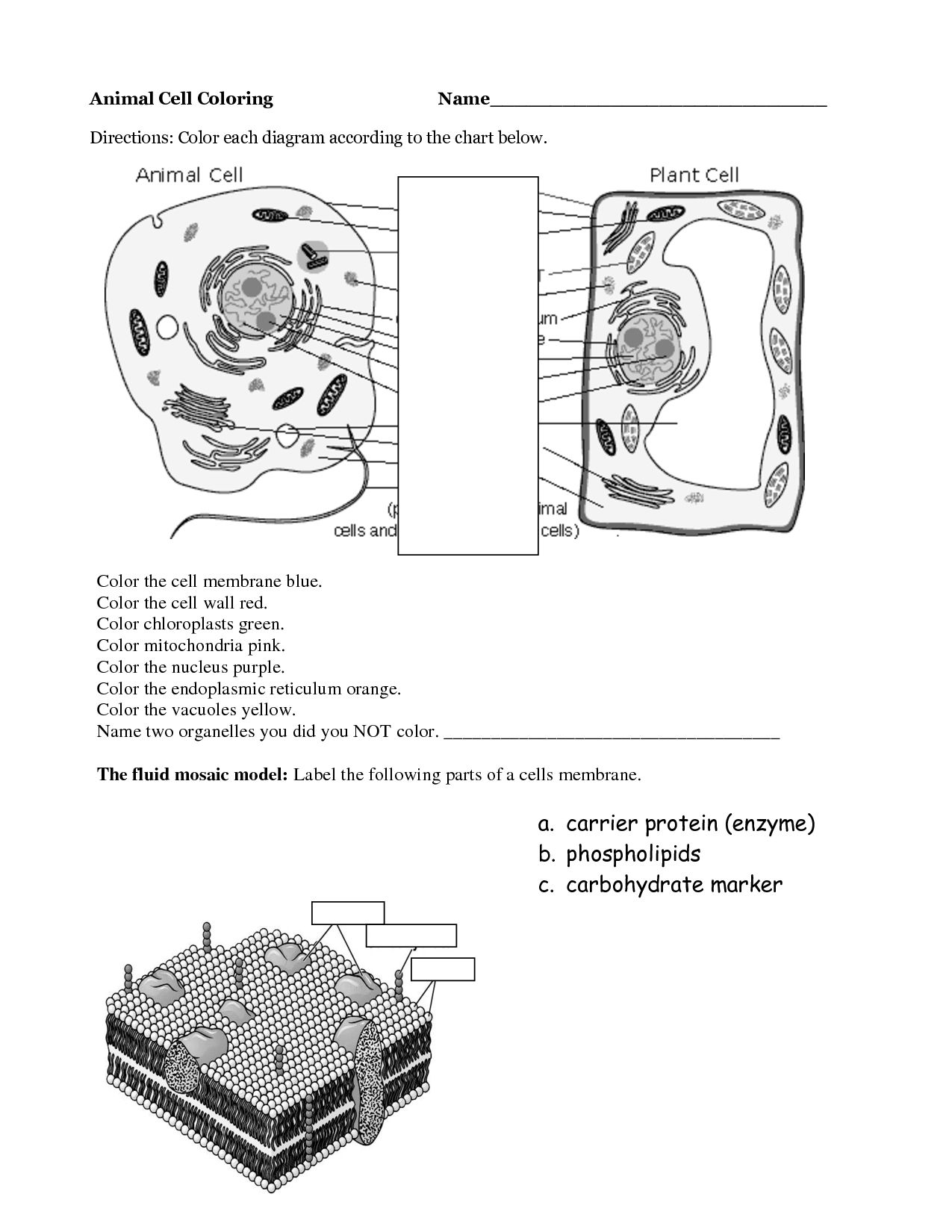 Worksheet Animal Cell Coloring Worksheet Worksheet Fun