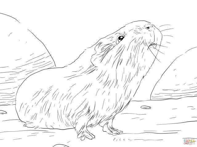 Curious Guinea Pig Coloring Page  Free Printable Coloring Pages