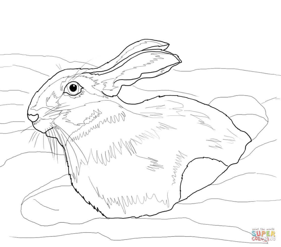 Arctic Hare Coloring Page