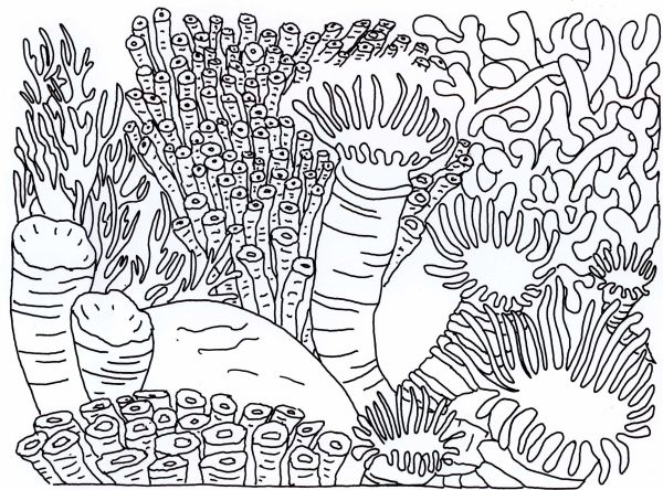 coral coloring pages # 18
