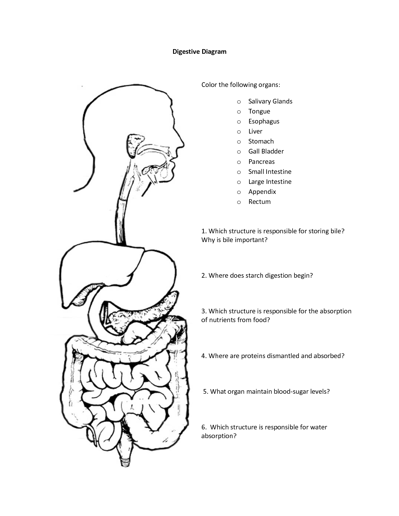 Digestive System Coloring Workbook Answers