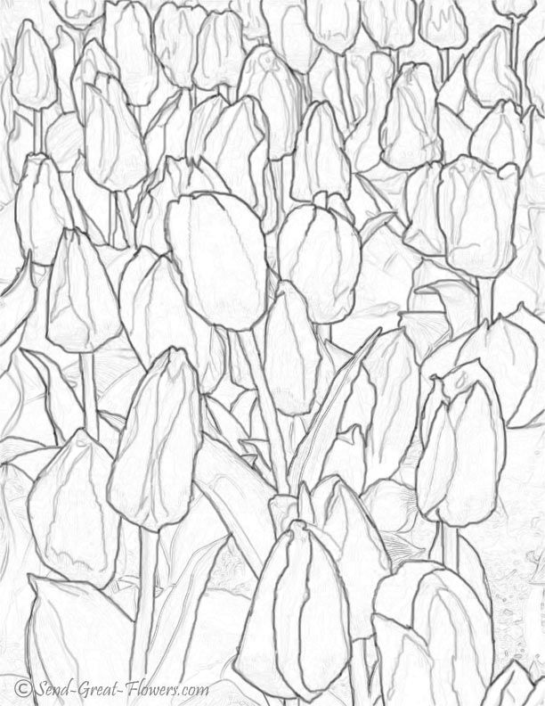 Coloring Pages Of Tulips Coloring Home