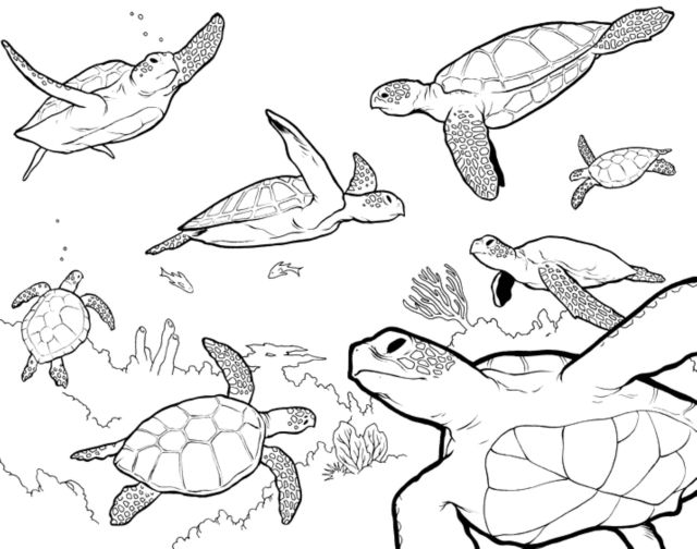 ADULT COLORING PAGES TURTLE - Coloring Home