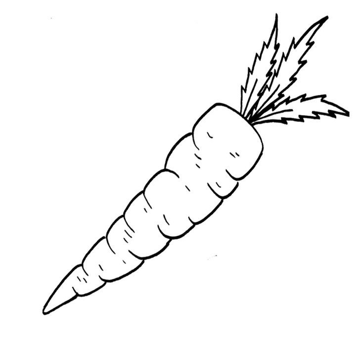 carrot  black and white outline  coloring pagefree