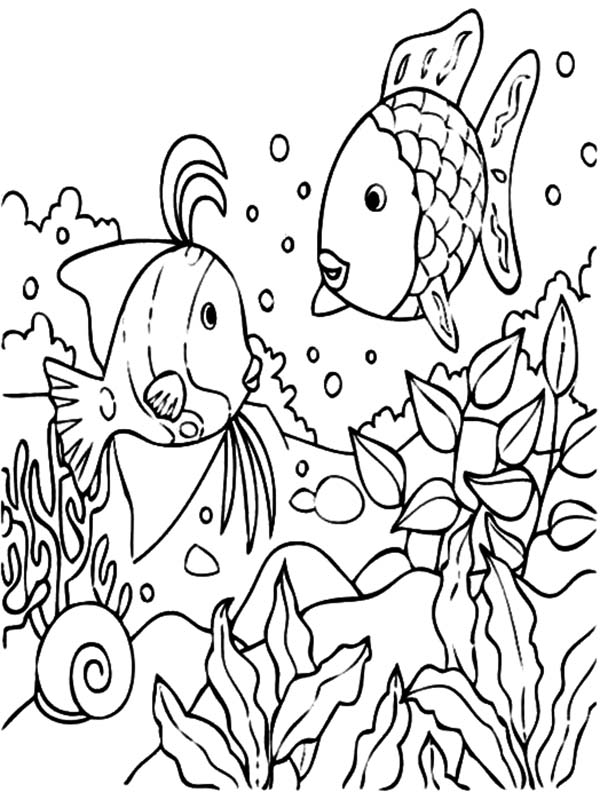 coloring pages tropical  coloring home