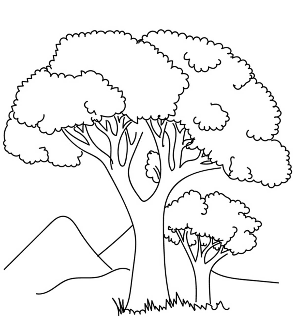 Tree Of Life Coloring Pages