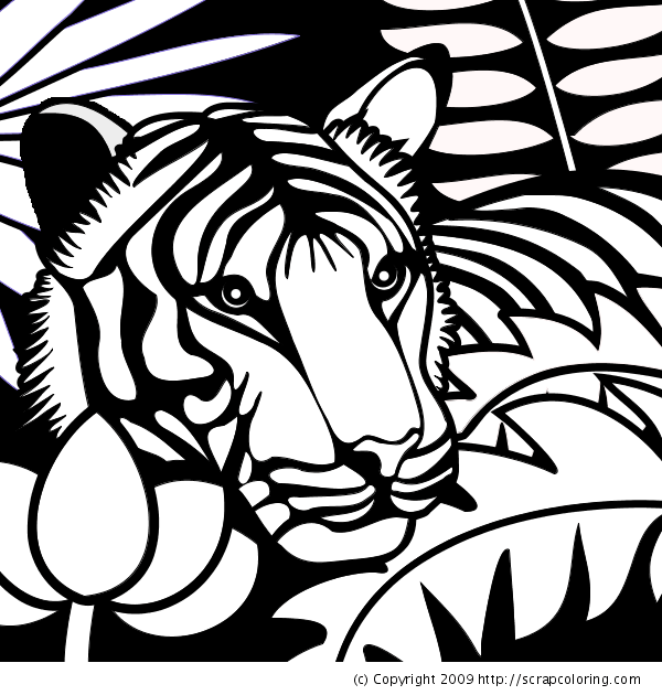 Jungle Coloring Pages 1 Coloring Kids