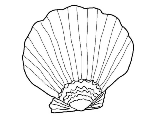 Seashell Coloring Page - Free Printable Coloring Pages for Kids