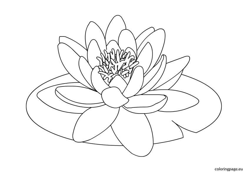 Lotus Winter Day Cream