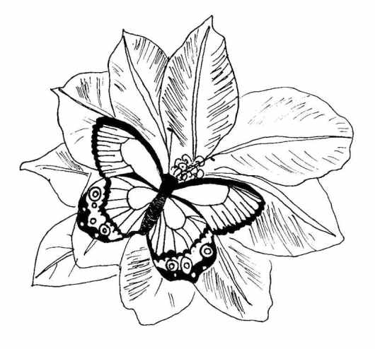 Butterfly Coloring Pages Free Printable