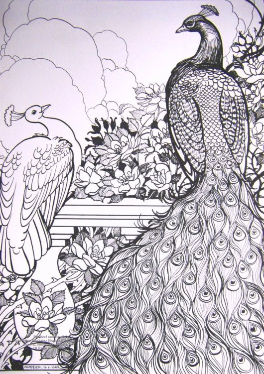 the_beautiful_peacock_coloring_pages