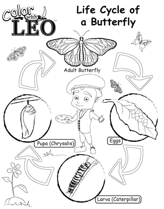 Life-Cycle-of-Butterfly-coloring-pages