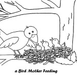 Mother-bird-and-babies-in-bird-nest-coloring-pages