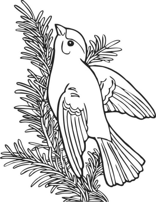 american-goldfinch-coloring-page-online