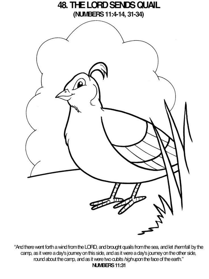 quail-california-bird-coloring-sheet