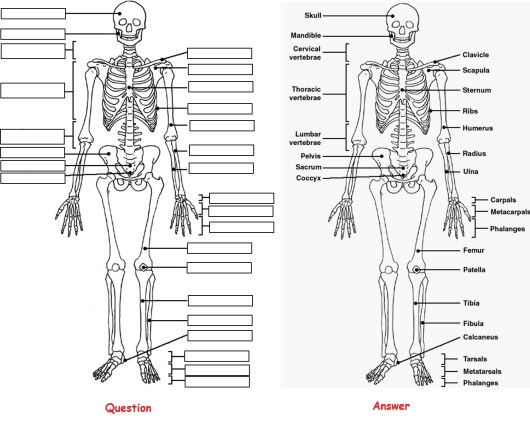Human Anatomy Coloring Pages