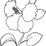 Beautiful Hibiscus Coloring Pages Online