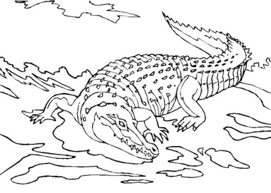 the wild and cute crocodile coloring pages for all ages coloring