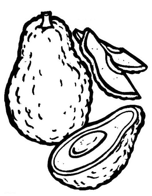 avocado coloring pictures