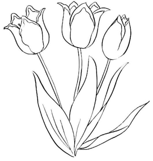 Beautiful Tulip Flower Coloring Book