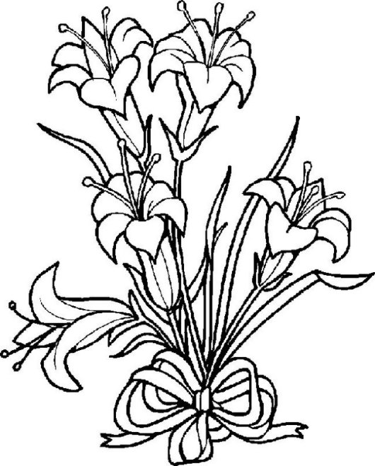 lily plants coloring pictures