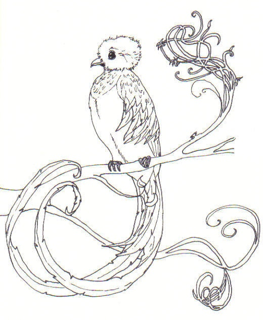 Resplendent quetzal coloring sheet colorful plumage bird coloring page