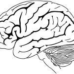Brain Coloring and Drawing Page for Kids