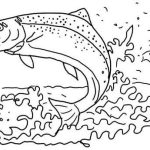Wonderful Apache Trout Fish Coloring Sheet