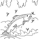 beautiful rainbow trouts coloring page