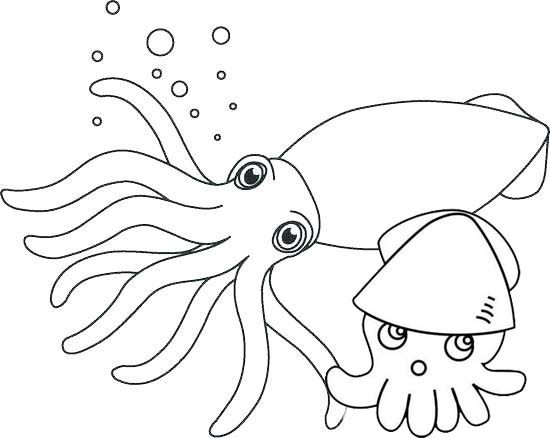 squid coloring page preschool # 27