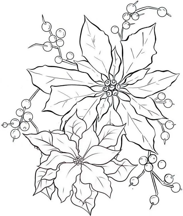 beautiful poinsettia flower coloring page for girls