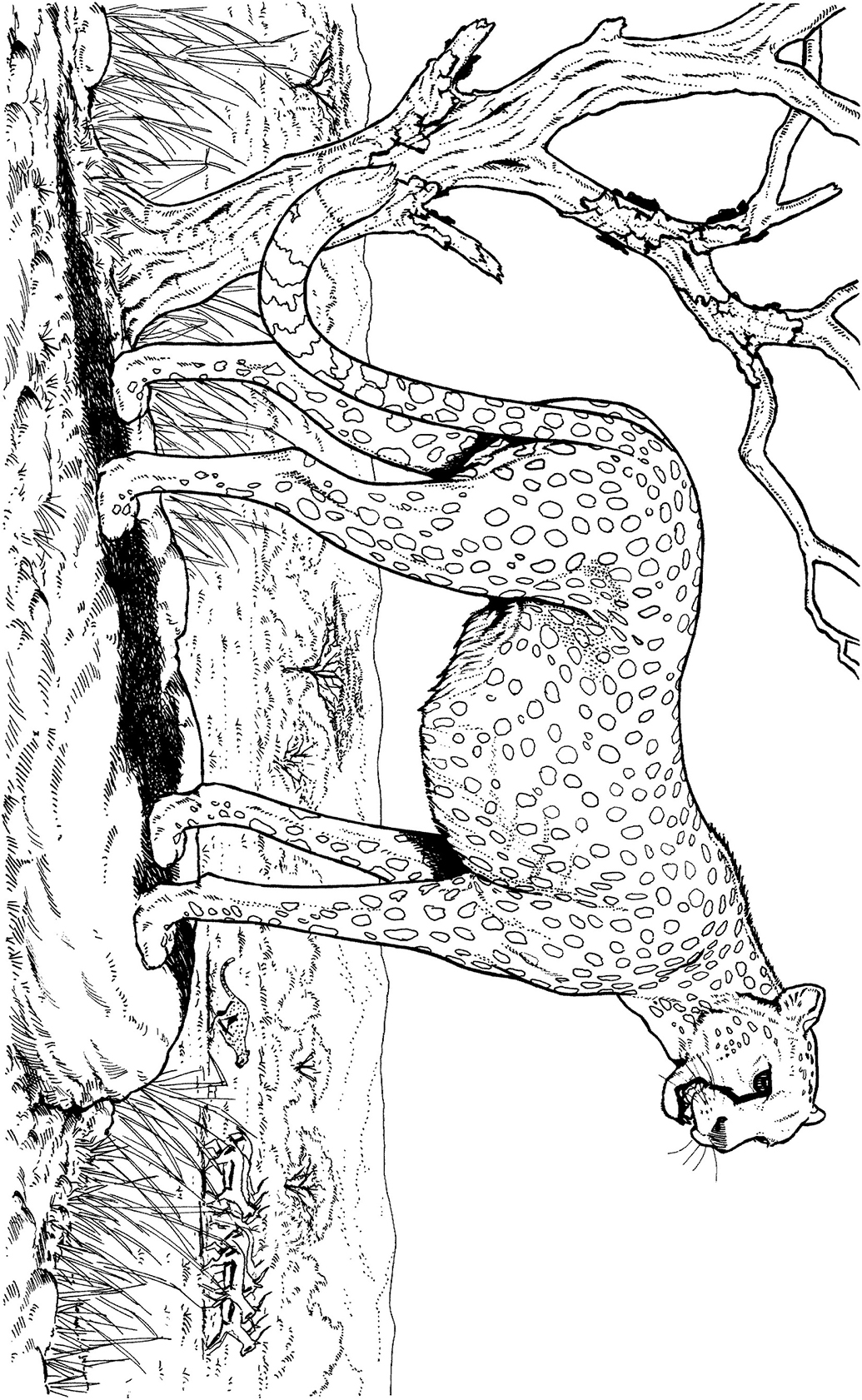 25 Best Cheetah Girls One World Coloring Pages