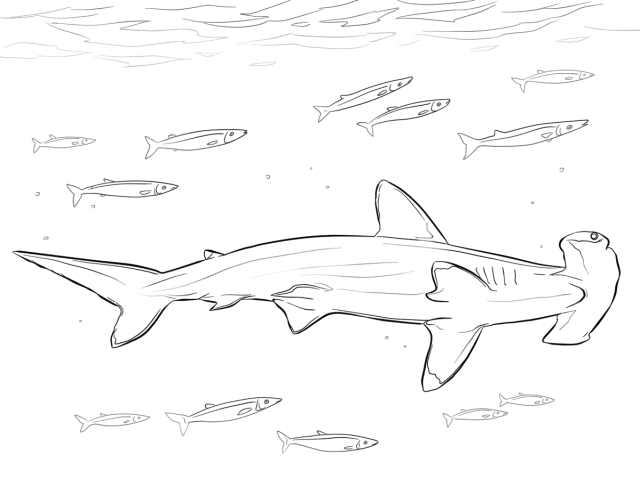 Hammerhead Shark with pilot fishes in marine life Coloring Pages