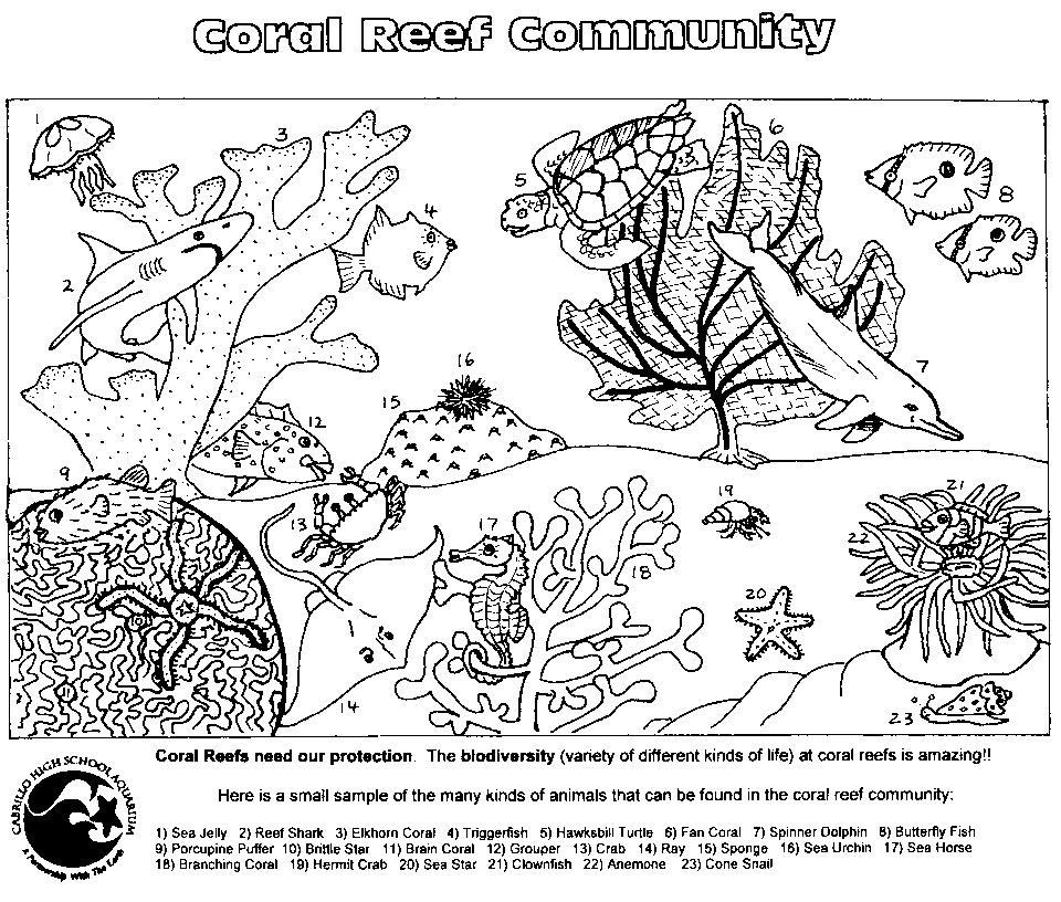 Coral Reef Coloring Pages Color