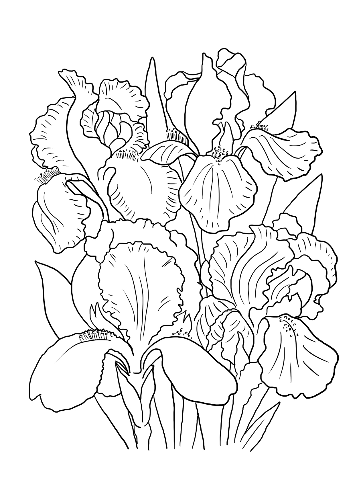 Iris Coloring Pages To Download And Print For Free