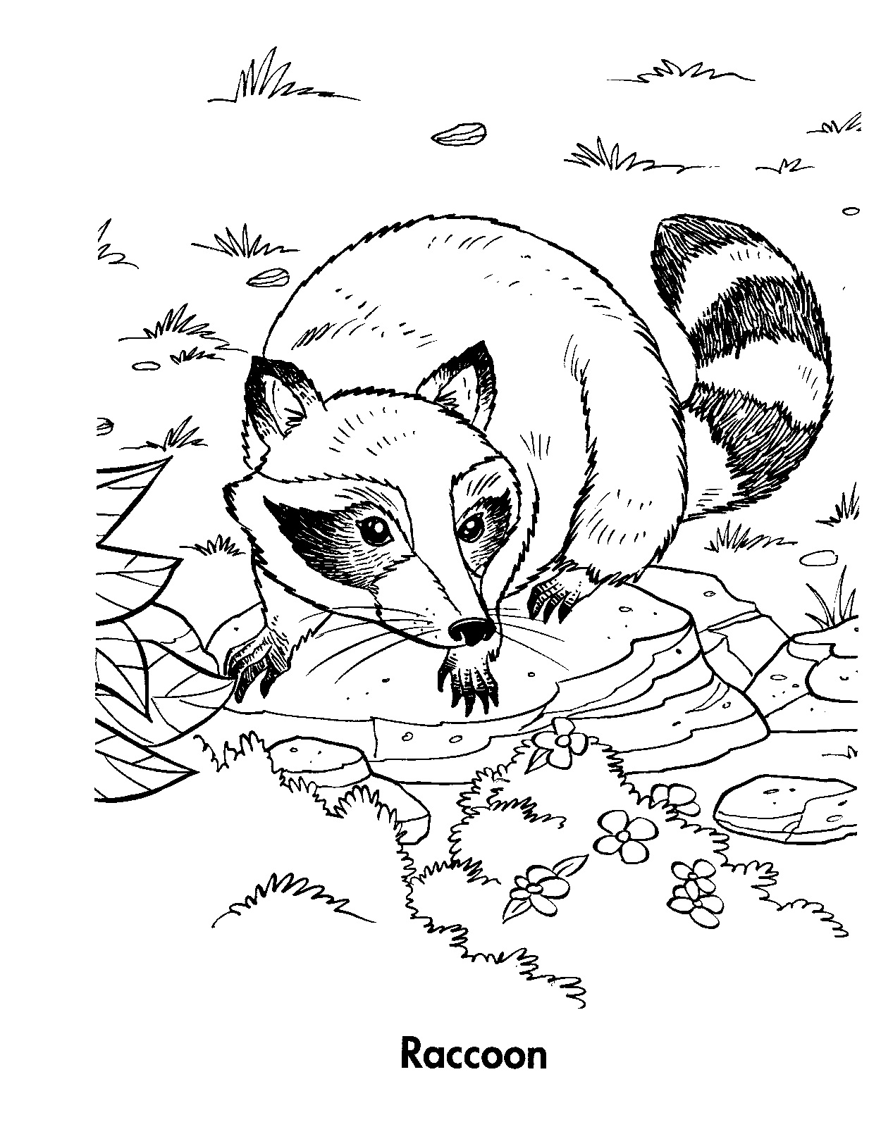 Raccoon Preschool Worksheet