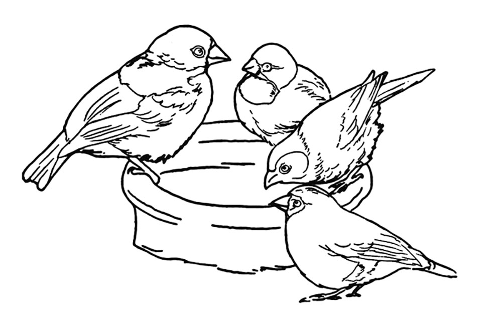 Sparrow Coloring Pages To Download And Print For Free