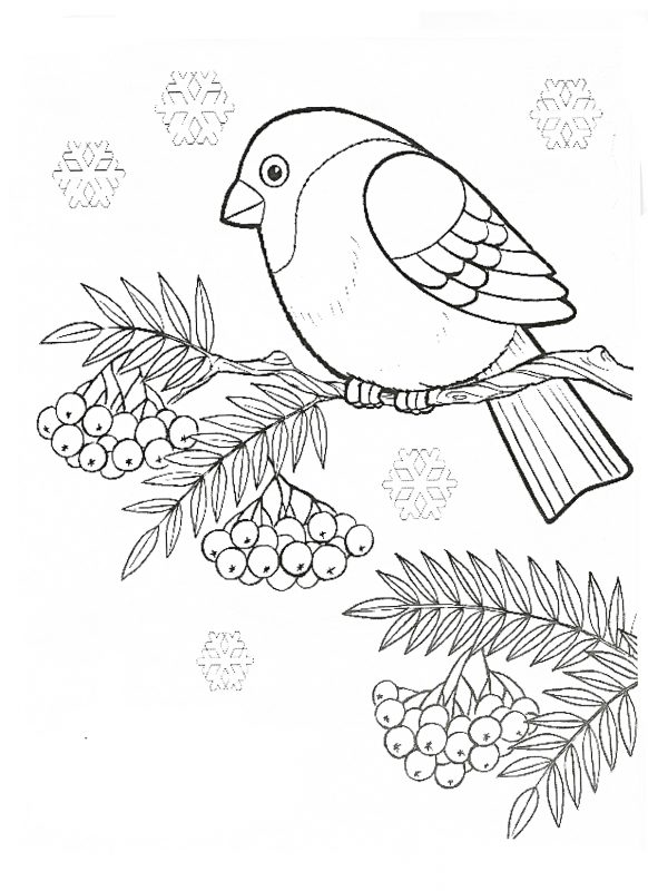 Bullfinch Coloring Pages To Download And Print For Free